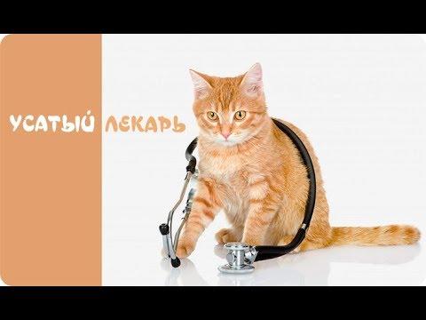Вопрос: Бывают ли у котов депрессии и как их лечить?