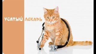 Как кошки лечат людей? | Невероятные факты!