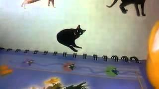 позноем животных кошки воспитания