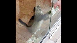 扉の隙間から、通行人のお金を奪い取っていた会社の猫。まさかの行動に社員も驚きを隠せない。 thumbnail
