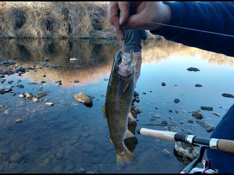 Walker River Trout Fishing