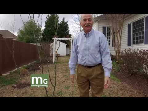 Master Gardening: Bud's House in February