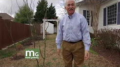 Master Gardening: Bud's House in February