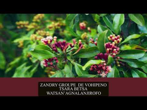 ZANDRY GRP DE VOHIPENO  Tsara betsa  Nouveauté Officiel 2k19