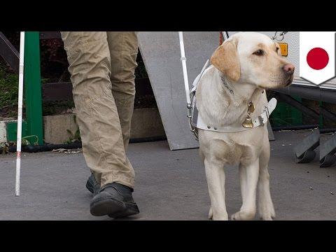 盲導犬、刺され負傷も吠えず
