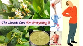 Health Benefits Of Harsringar | The Miracle Cure For Everything | By Wow Healthy Desi Food !