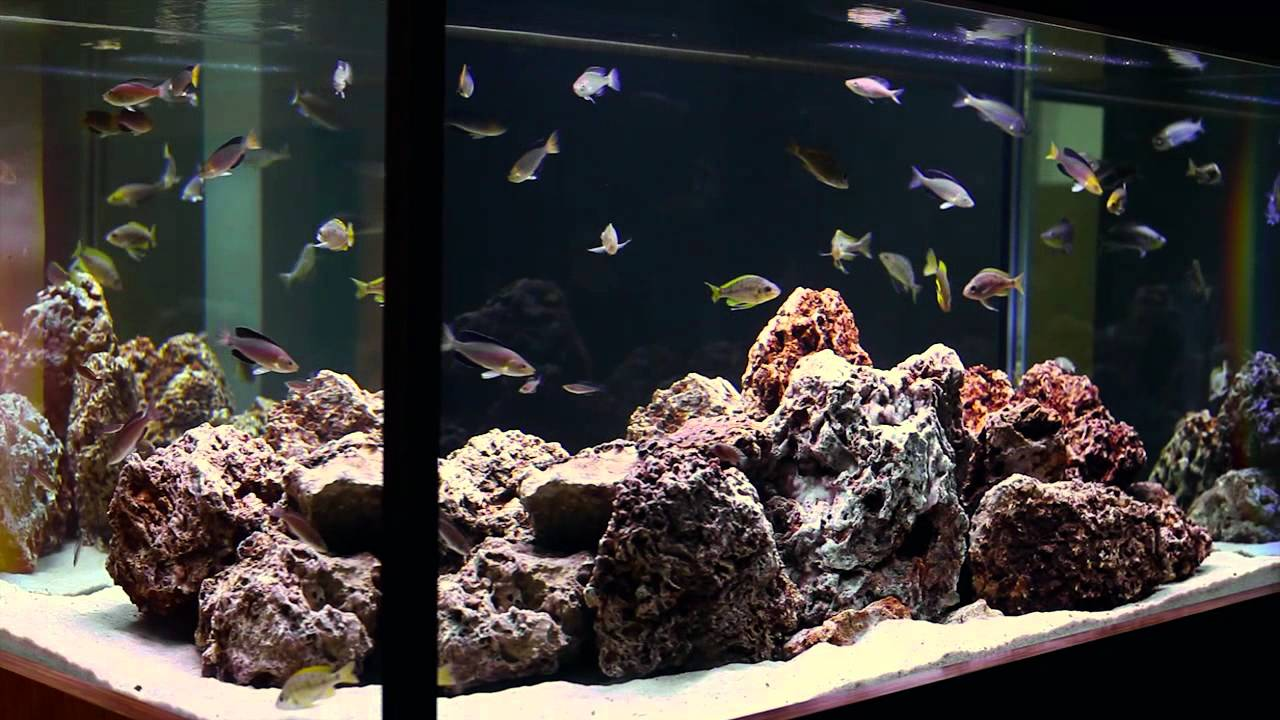 Hardscape Aquarium Design : ... of Tanganyikan Fish-- A Hardscape by Aquarium Design Group - YouTube