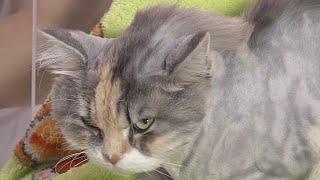 Test.tv: Все для животных. Все о груминге кошек