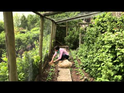 What to do in the garden in early summer