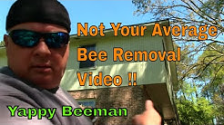 Honey Bees Swarm Me During A Live Bee Removal