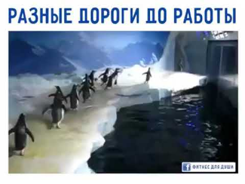 Пингвины и бабачка белый медведь 🐻  ползёт