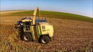 Sunrise Farms Forage Sorghum Harvest
