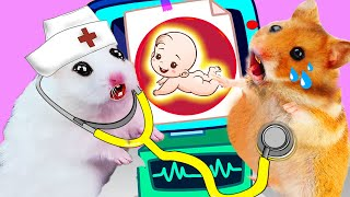 Hamster Pregnancy Baby Doctor Funny Situations In Hamster Stories