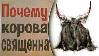 Почему корова священное животное.  Общение с Духами