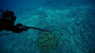 Spearfishing in Hawaii | Off the Hook