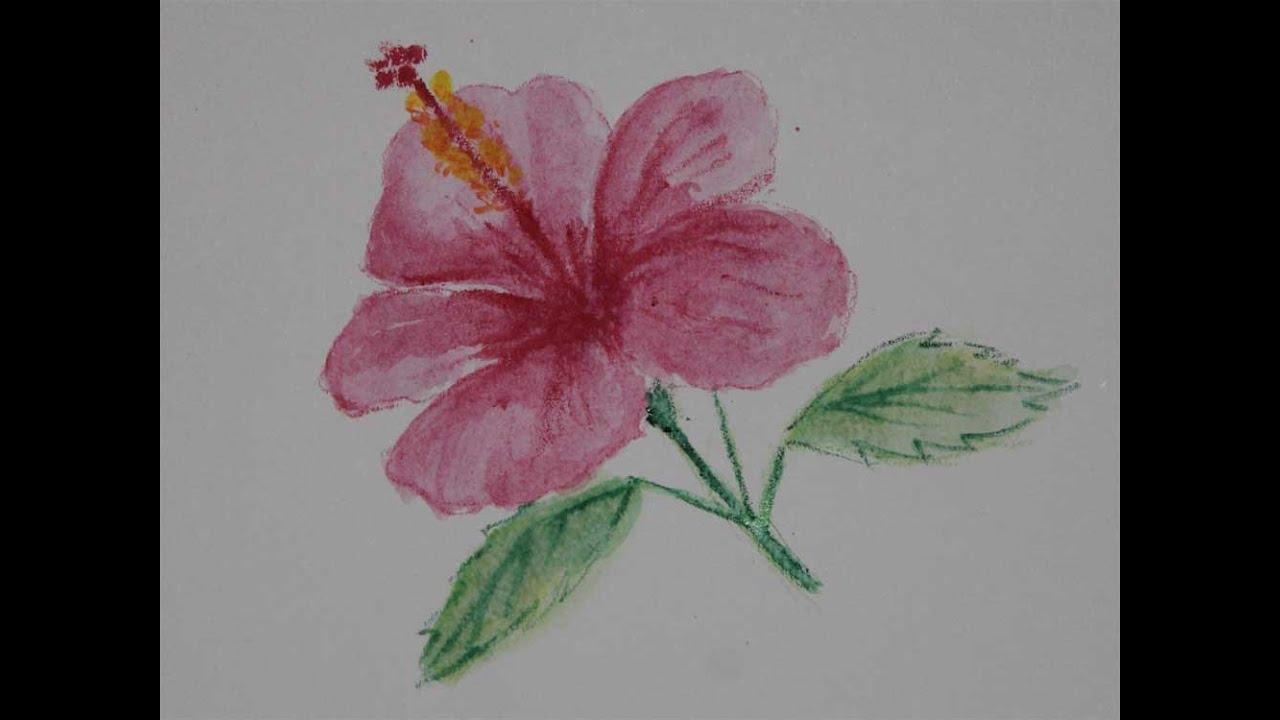 Cara Menggambar Bunga Kembang Sepatu Dengan Pensil Warna Youtube