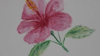 cara menggambar bunga kembang sepatu dengan pensil warna