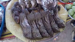 ลุยลาว EP16:ตลาดของป่า เมืองเซบั้งไฟ  งูสิง เขียดขาคำ กระรอกเเดง ต่อนอนเว็น นกกี้
