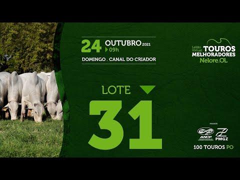 LOTE 31 - LEILÃO VIRTUAL DE TOUROS MELHORADORES  - NELORE OL - PO 202