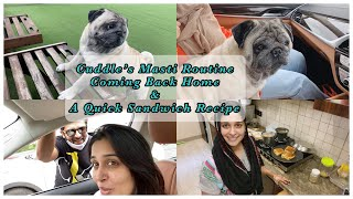Our Pet's Masti Routine| Coming Back Home| My Quick Sandwich Recipe| Dipika Kakar Ibrahim