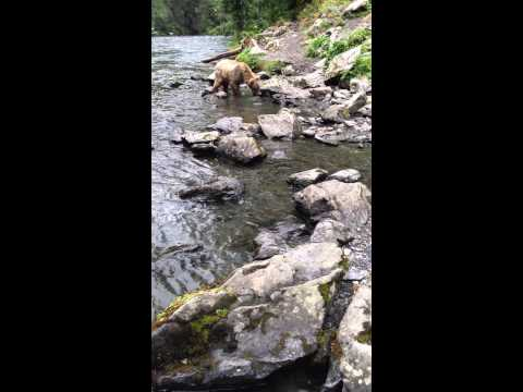 Hey Bear!  Russian River Alaska 2015.