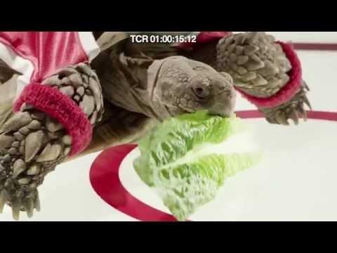 Oatmeal Crisp - Tortoise (Directors Cut)