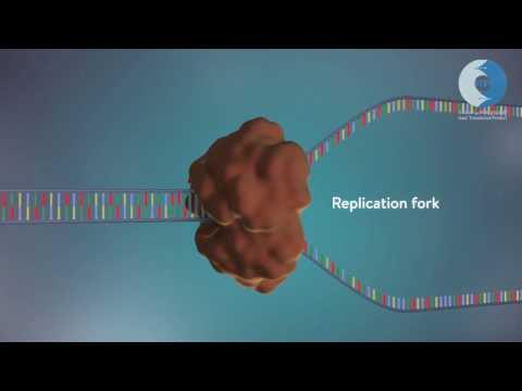 تضاعف الـDNA (الحمض النووي الريبوزي منقوص الاوكسجين)