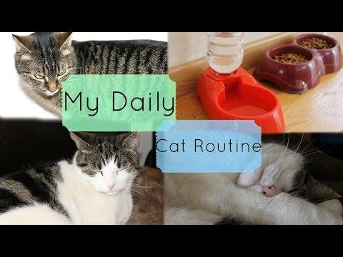 "My ""Daily"" Cat Routine | My Animal World"