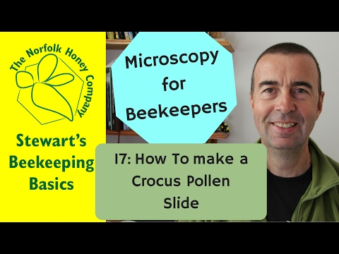 Microscopy for Beekeepers 17: How to make a Crocus Pollen Sl