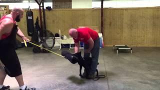"Black German Shepherd Female Puppy ""jado"" 19 Wks Protection Dog For Sale"