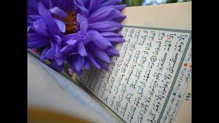 Surah Al Mulk Best Recitation by Omar hisam al arabi