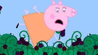 Peppa Pig Episodes | The Blackberry Bush | Kids Videos