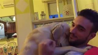 Adorably Guilty Pooch Tries To Apologize For Poor Behavior