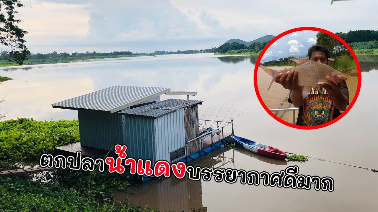 ตกปลาแม่น้ำเจ้าพระยา #แพตกปลาหนึ่งเดียวชัยนาทตอนนี้ ตามล่าปลาใหญ่ช่วงน้ำแดง