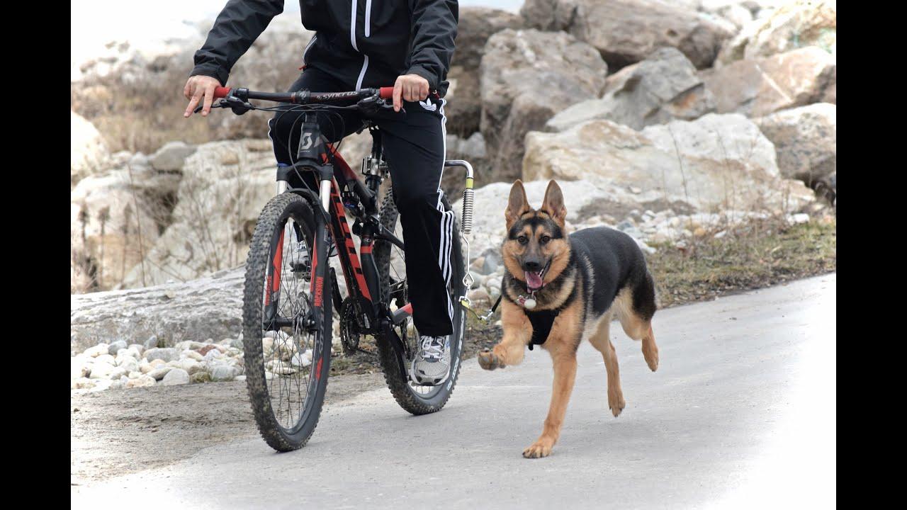 Spring Leash Togo Bike Attachment 2016 Youtube