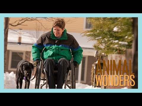 8 Things You Should Know About Service Animals