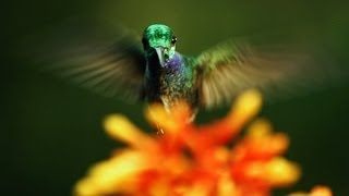 Repeat youtube video Louie Schwartzberg: The hidden beauty of pollination