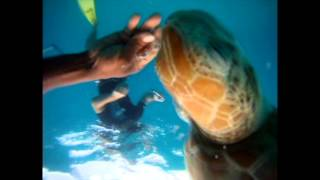 Elegance Catamaran Cruises Barbados - Swimming with Turtles