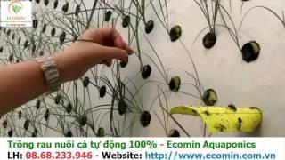 Gambar cover Mô hình trồng rau nuôi cá Aquaponics tại nước ngoài - Ecomin.com.vn