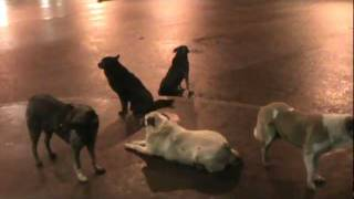 Санкт-Петербург. Собаки