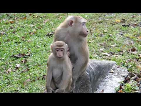 AGOSTO IL THAILANDIA: IL VIDEO!