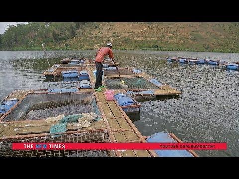 Fish Feed Production In Kigali And Feeding At Lake Muhazi Farm