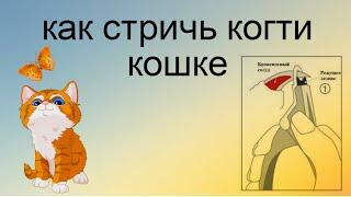 😻Как подстричь когти кошке #когтикошки Легко!