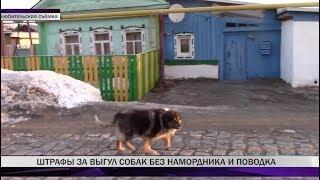 За выгул собак без намордника и поводка предусмотрены штрафы