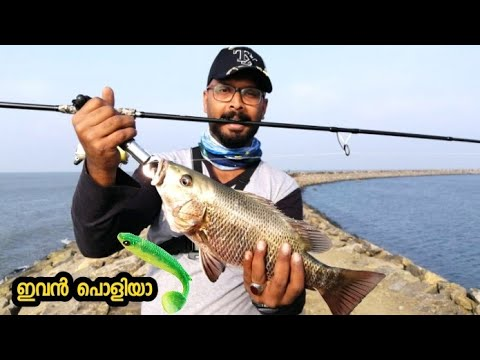 #chemballi Chemballi fishing in harbour | catching mangrove jack shad. (Malayalam)