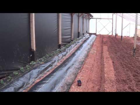 Duckweed grower
