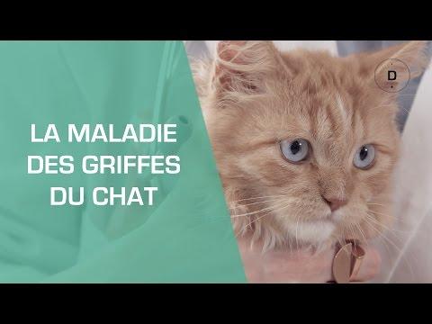 La Maladie Des Griffes Du Chat - Animaux
