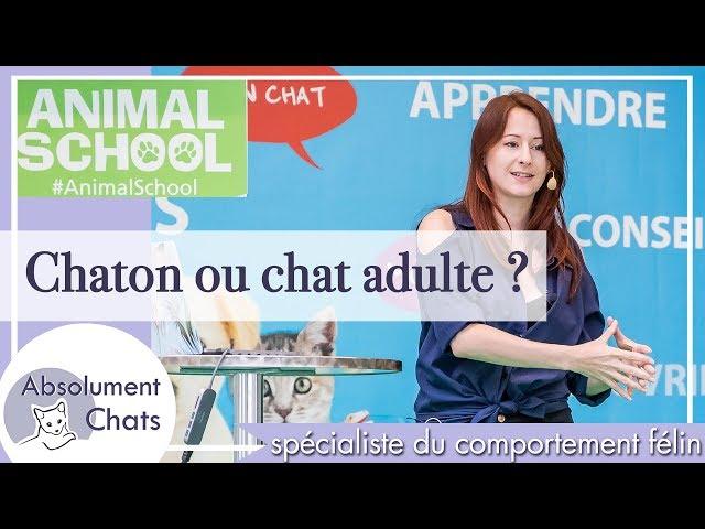 faut-il adopter un chaton ou un chat adulte ?