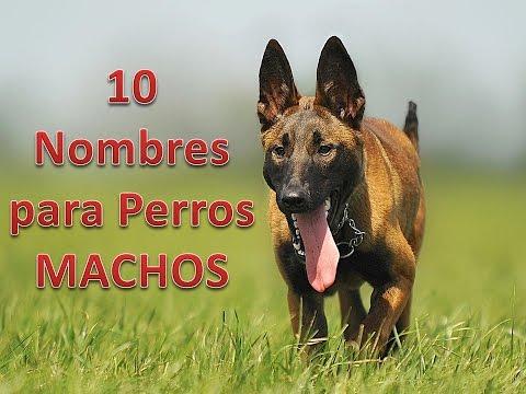 10 Nombres Para Perros Machos Youtube