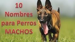 10 Nombres para Perros MACHOS